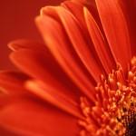 Virágok • Újragondolt sziromvarázs