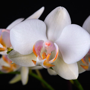 Digitális fotózás 5 Orchidea fajták