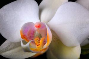Digitális fotózás 6 Orchidea fajták