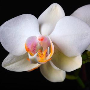 Digitális fotózás 7 Orchidea fajták
